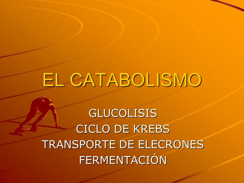 EL CATABOLISMO GLUCOLISIS CICLO DE KREBS TRANSPORTE DE ELECRONES FERMENTACIÓN