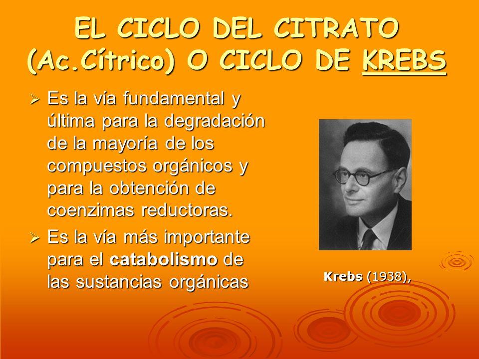 EL CICLO DEL CITRATO (Ac.Cítrico) O CICLO DE KREBS KREBS Es la vía fundamental y última para la degradación de la mayoría de los compuestos orgánicos