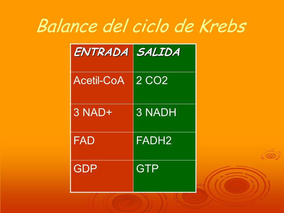 Balance del ciclo de Krebs ENTRADASALIDA Acetil-CoA2 CO2 3 NAD+3 NADH FADFADH2 GDPGTP