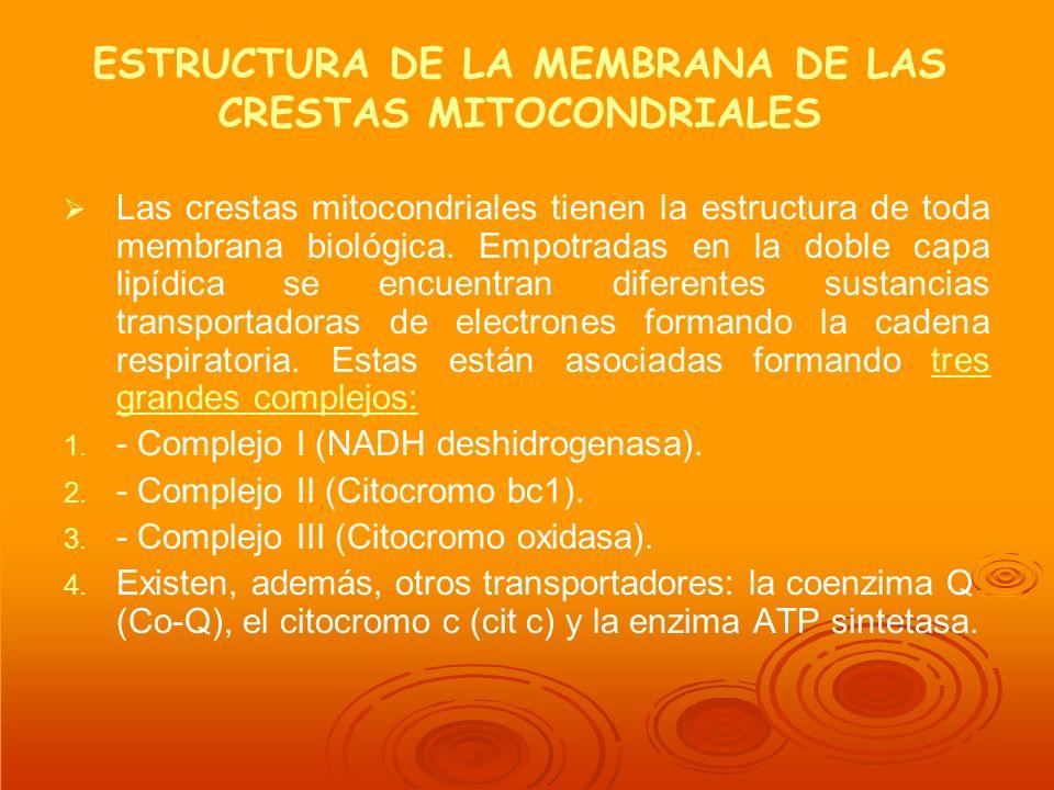 ESTRUCTURA DE LA MEMBRANA DE LAS CRESTAS MITOCONDRIALES Las crestas mitocondriales tienen la estructura de toda membrana biológica. Empotradas en la d