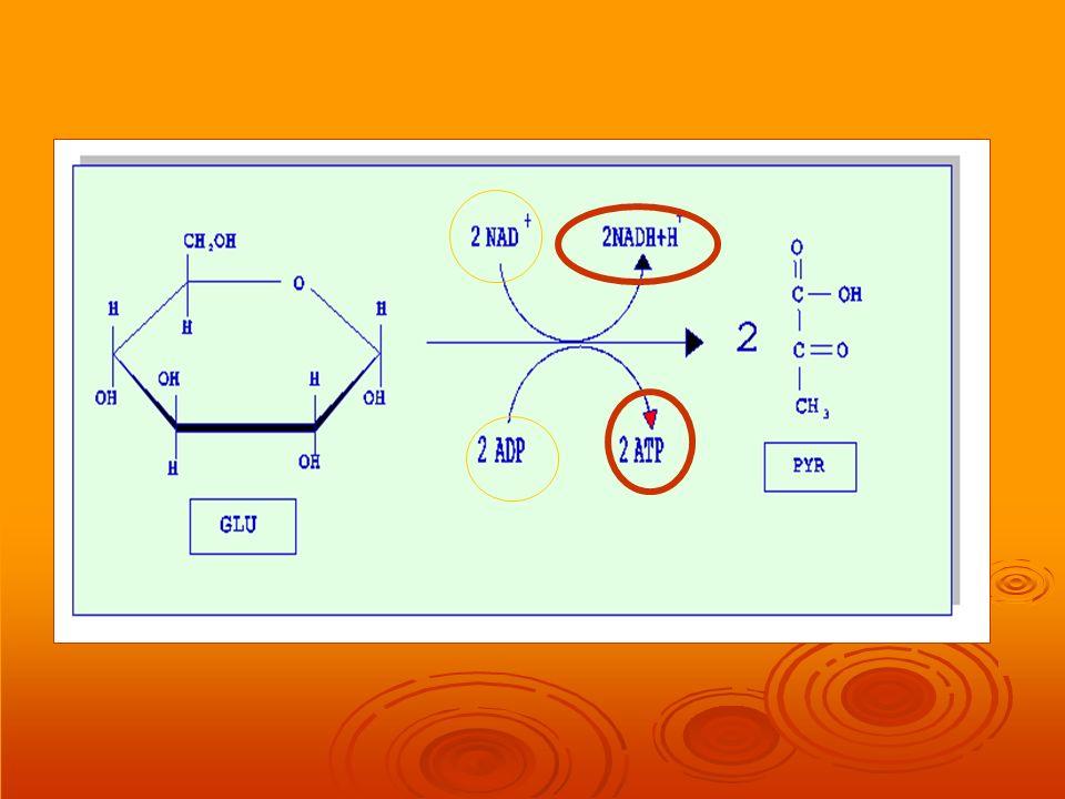 Fermentación Alcohólica La fermentación alcohólica tiene el mismo objetivo que la fermentación láctica: la recuperación del NAD+ en condiciones anaeróbicas En la fermentación alcohólica el ac.