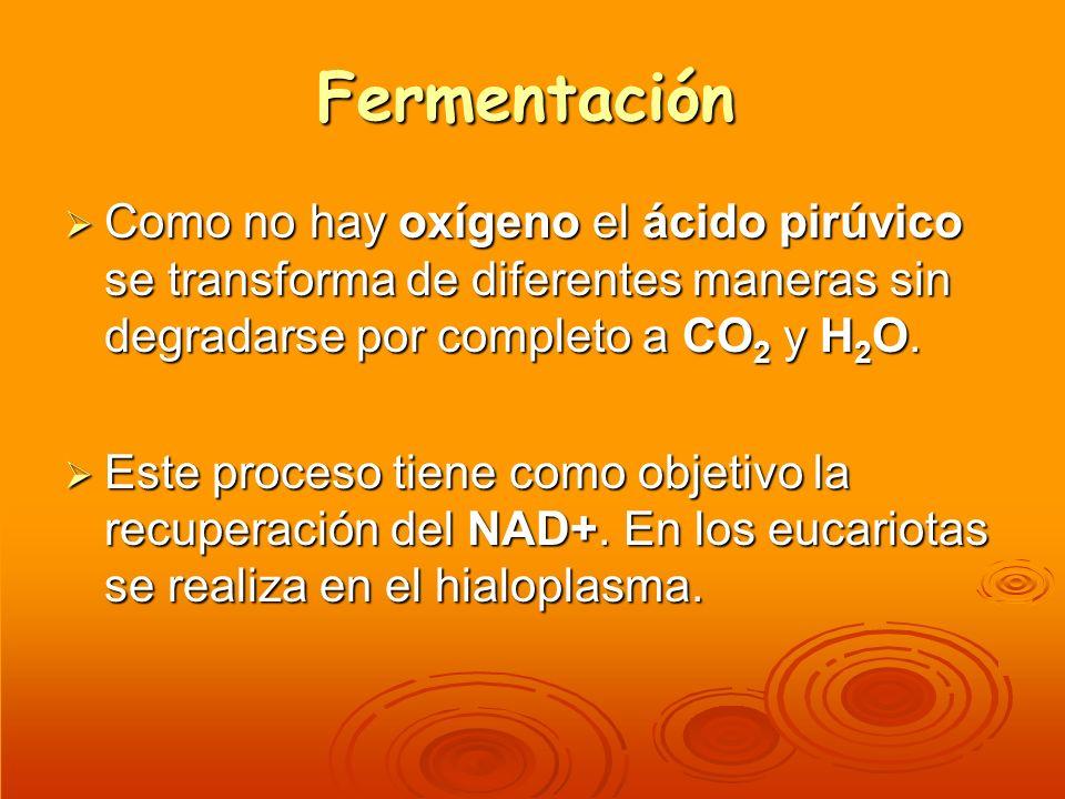 Fermentación Como no hay oxígeno el ácido pirúvico se transforma de diferentes maneras sin degradarse por completo a CO 2 y H 2 O. Como no hay oxígeno