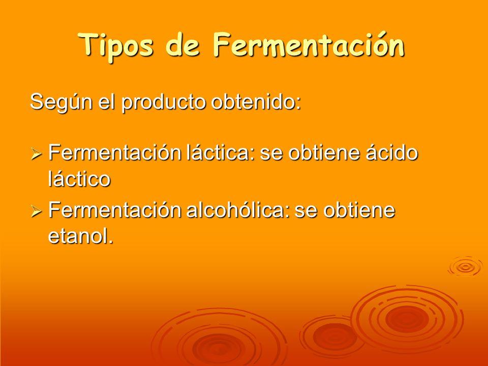 Tipos de Fermentación Según el producto obtenido: Fermentación láctica: se obtiene ácido láctico Fermentación láctica: se obtiene ácido láctico Fermen
