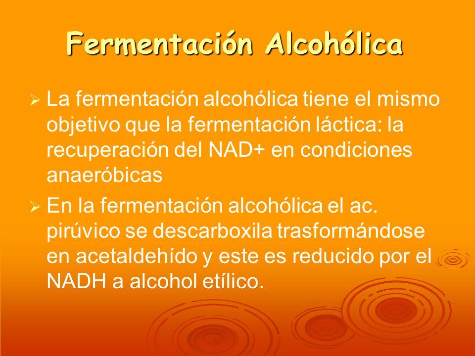 Fermentación Alcohólica La fermentación alcohólica tiene el mismo objetivo que la fermentación láctica: la recuperación del NAD+ en condiciones anaeró