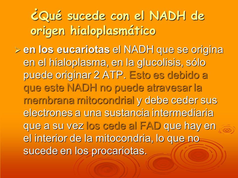 ¿ Qué sucede con el NADH de origen hialoplasmático en los eucariotas el NADH que se origina en el hialoplasma, en la glucolisis, sólo puede originar 2