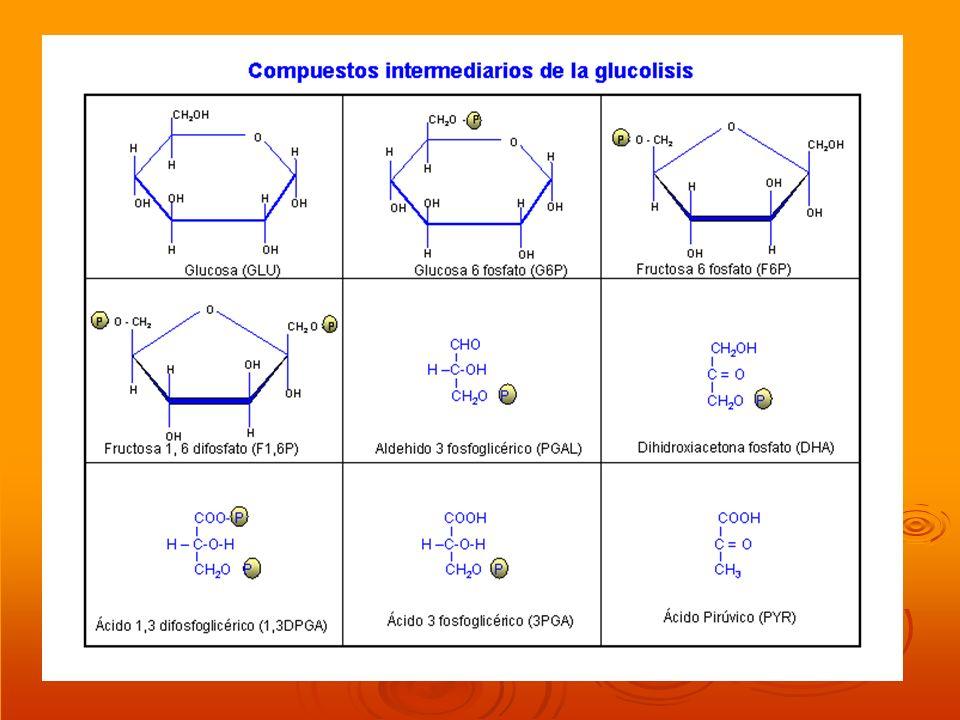 ESTRUCTURA DE LA MEMBRANA DE LAS CRESTAS MITOCONDRIALES Las crestas mitocondriales tienen la estructura de toda membrana biológica.