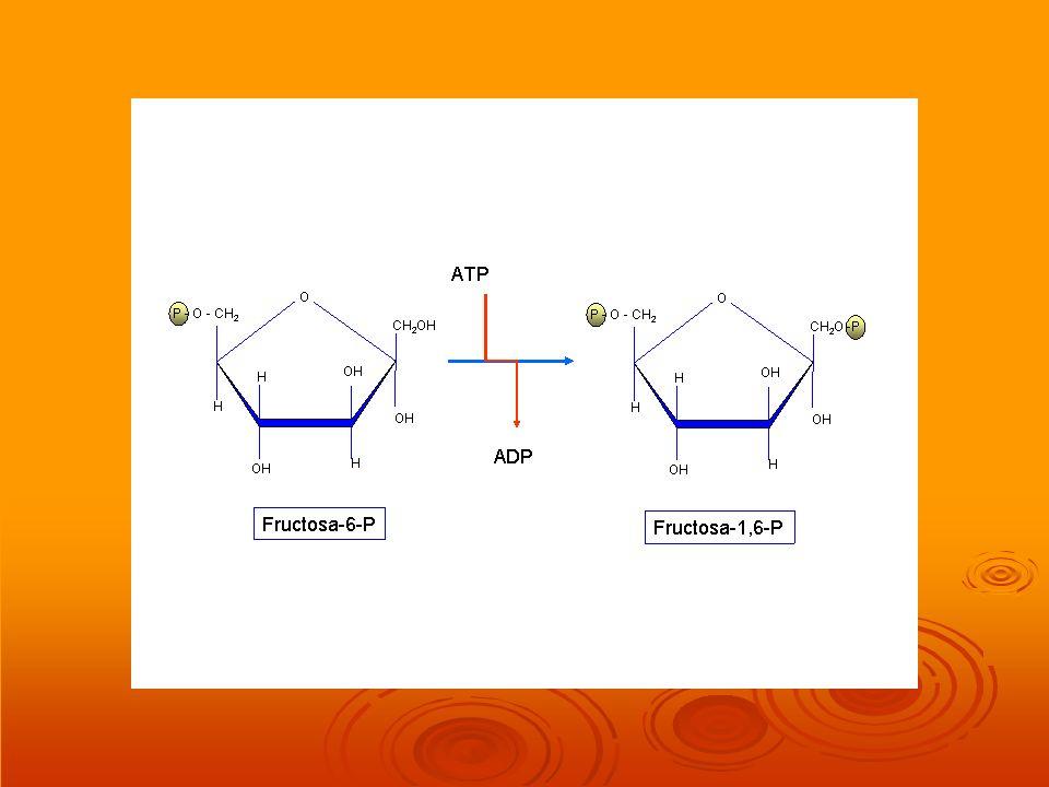 Fermentación Como no hay oxígeno el ácido pirúvico se transforma de diferentes maneras sin degradarse por completo a CO 2 y H 2 O.