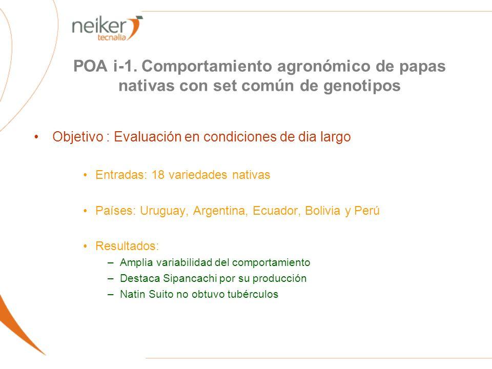 POA i-1. Comportamiento agronómico de papas nativas con set común de genotipos Objetivo : Evaluación en condiciones de dia largo Entradas: 18 variedad