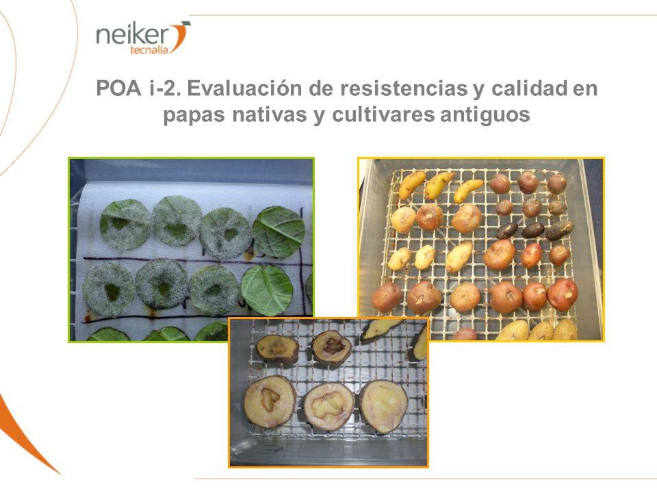 POA i-2. Evaluación de resistencias y calidad en papas nativas y cultivares antiguos