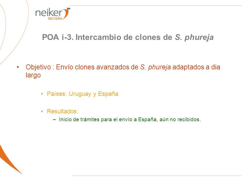 POA i-3. Intercambio de clones de S. phureja Objetivo : Envío clones avanzados de S. phureja adaptados a dia largo Países: Uruguay y España Resultados