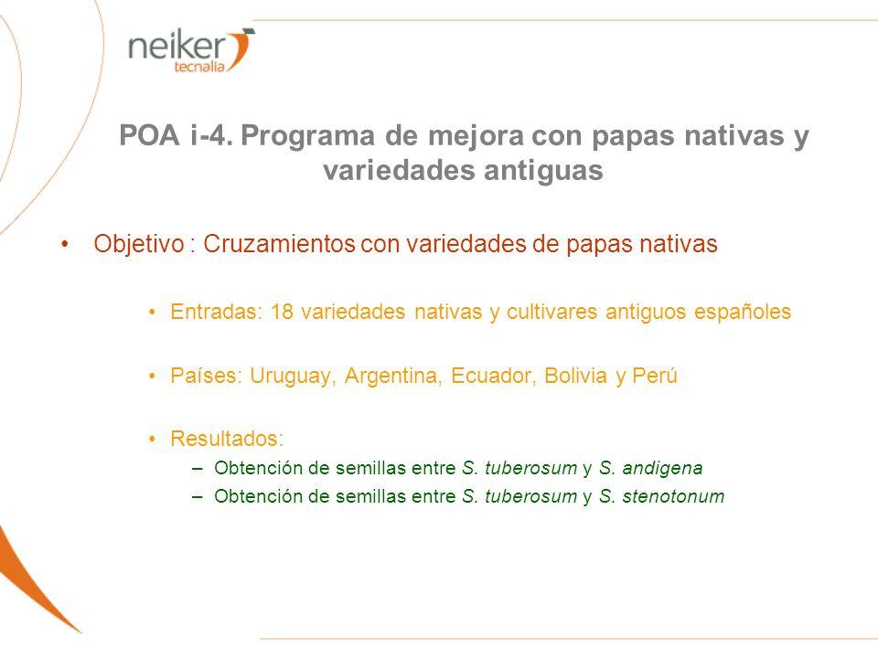 POA i-4. Programa de mejora con papas nativas y variedades antiguas Objetivo : Cruzamientos con variedades de papas nativas Entradas: 18 variedades na