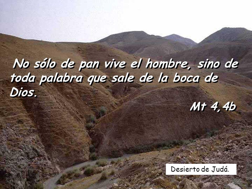 Desierto de Judá.No sólo de pan vive el hombre, sino de toda palabra que sale de la boca de Dios.