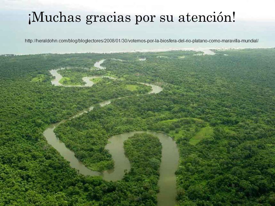 ¡Muchas gracias por su atención! http://heraldohn.com/blog/bloglectores/2008/01/30/votemos-por-la-biosfera-del-rio-platano-como-maravilla-mundial/