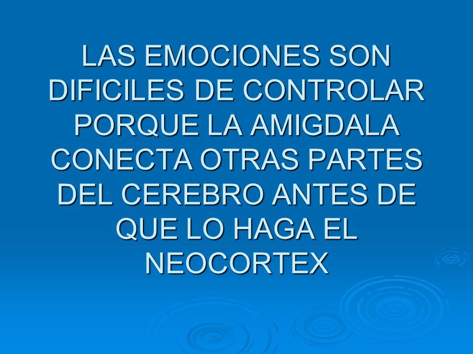 LAS EMOCIONES SON DIFICILES DE CONTROLAR PORQUE LA AMIGDALA CONECTA OTRAS PARTES DEL CEREBRO ANTES DE QUE LO HAGA EL NEOCORTEX