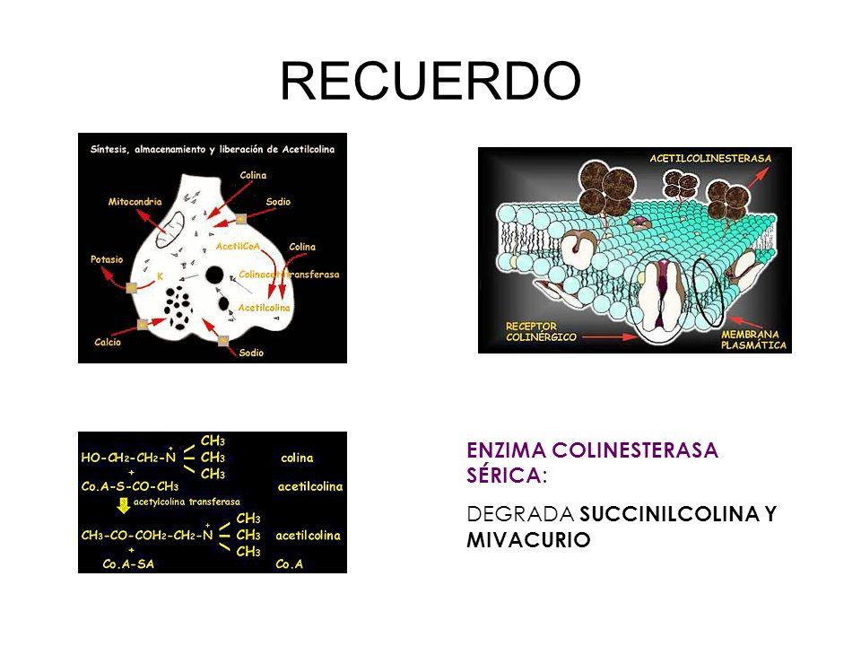 ENZIMA COLINESTERASA SÉRICA : DEGRADA SUCCINILCOLINA Y MIVACURIO