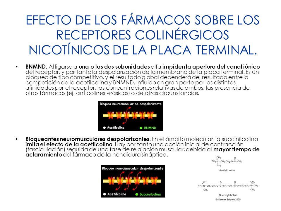 EFECTO DE LOS FÁRMACOS SOBRE LOS RECEPTORES COLINÉRGICOS NICOTÍNICOS DE LA PLACA TERMINAL. BNMND : Al ligarse a una o las dos subunidades alfa impiden