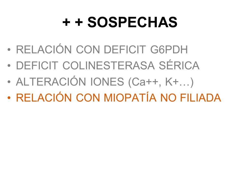 + + SOSPECHAS RELACIÓN CON DEFICIT G6PDH DEFICIT COLINESTERASA SÉRICA ALTERACIÓN IONES (Ca++, K+…) RELACIÓN CON MIOPATÍA NO FILIADA INTERACCION MEDICA