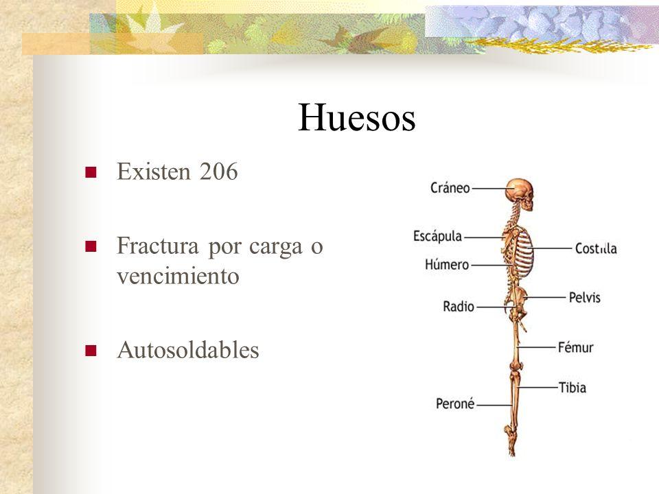 Huesos Existen 206 Fractura por carga o vencimiento Autosoldables