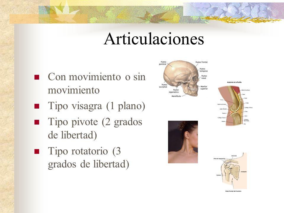 Articulaciones Con movimiento o sin movimiento Tipo visagra (1 plano) Tipo pivote (2 grados de libertad) Tipo rotatorio (3 grados de libertad)