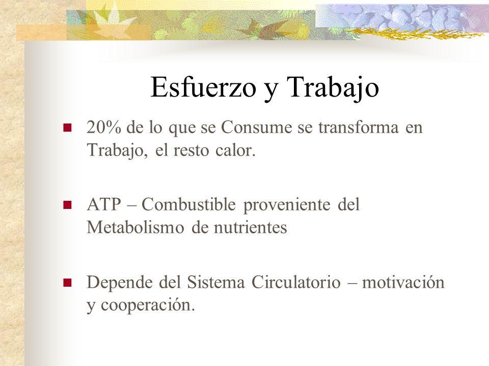 Esfuerzo y Trabajo 20% de lo que se Consume se transforma en Trabajo, el resto calor. ATP – Combustible proveniente del Metabolismo de nutrientes Depe