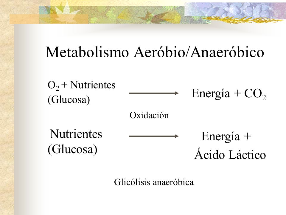 Metabolismo Aeróbio/Anaeróbico O 2 + Nutrientes (Glucosa) Nutrientes (Glucosa) Energía + CO 2 Energía + Ácido Láctico Glicólisis anaeróbica Oxidación
