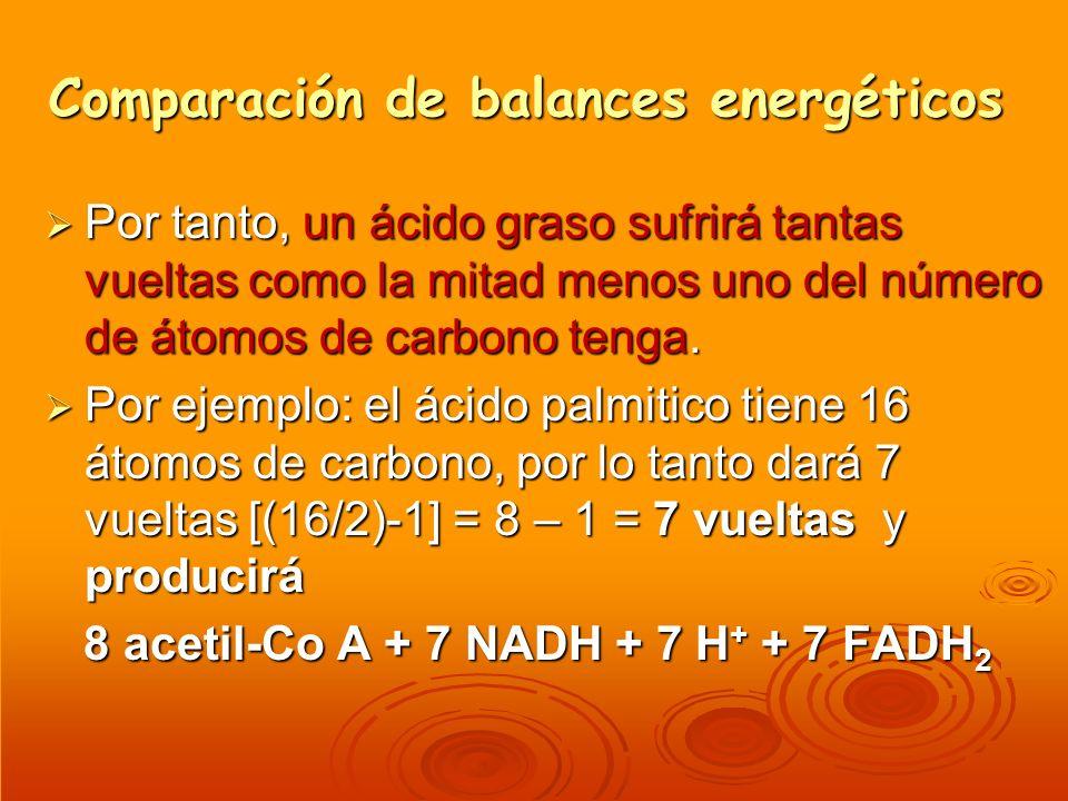 Comparación de balances energéticos Por tanto, un ácido graso sufrirá tantas vueltas como la mitad menos uno del número de átomos de carbono tenga. Po