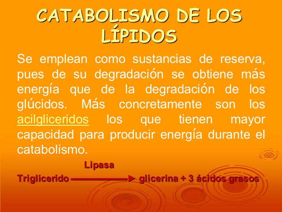CATABOLISMO DE LOS LÍPIDOS Se emplean como sustancias de reserva, pues de su degradaci ó n se obtiene m á s energ í a que de la degradaci ó n de los g