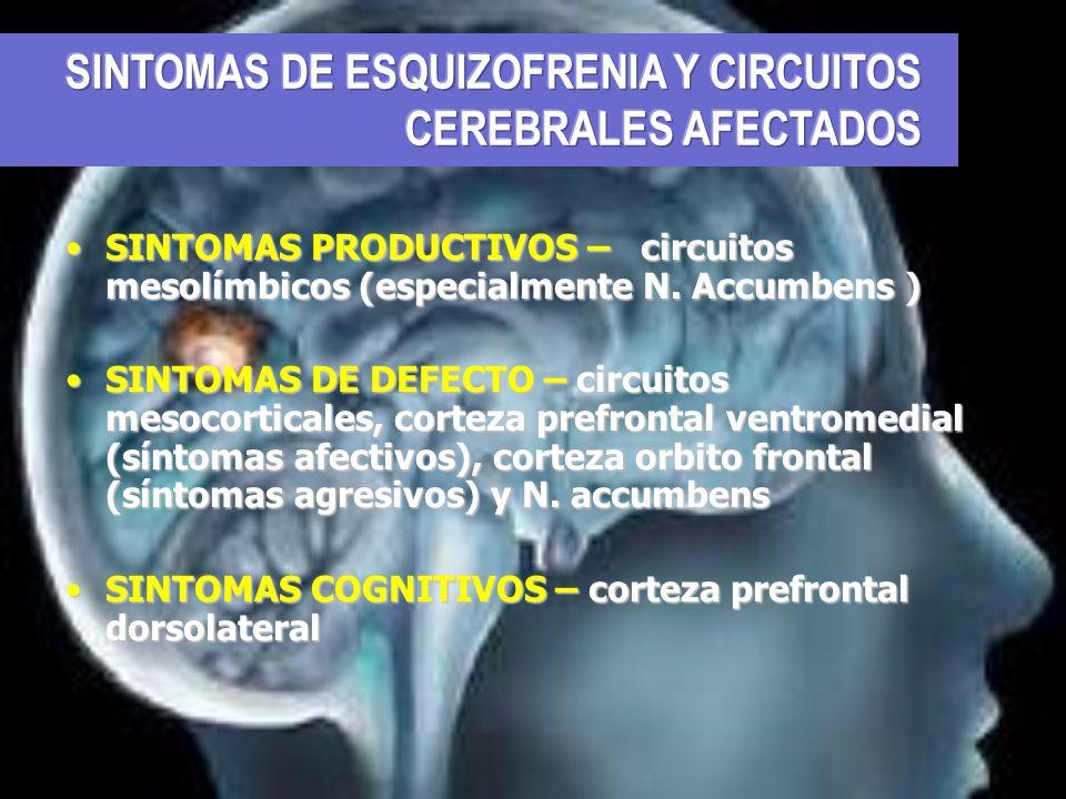 SINTOMAS PRODUCTIVOS – circuitos mesolímbicos (especialmente N. Accumbens )SINTOMAS PRODUCTIVOS – circuitos mesolímbicos (especialmente N. Accumbens )