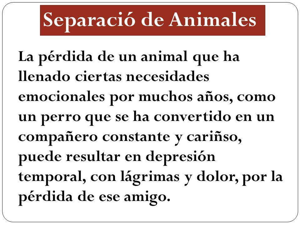 Separació de Animales La pérdida de un animal que ha llenado ciertas necesidades emocionales por muchos años, como un perro que se ha convertido en un