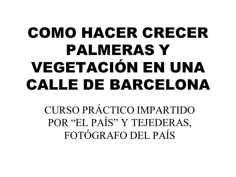 COMO HACER CRECER PALMERAS Y VEGETACIÓN EN UNA CALLE DE BARCELONA CURSO PRÁCTICO IMPARTIDO POR EL PAÍS Y TEJEDERAS, FOTÓGRAFO DEL PAÍS