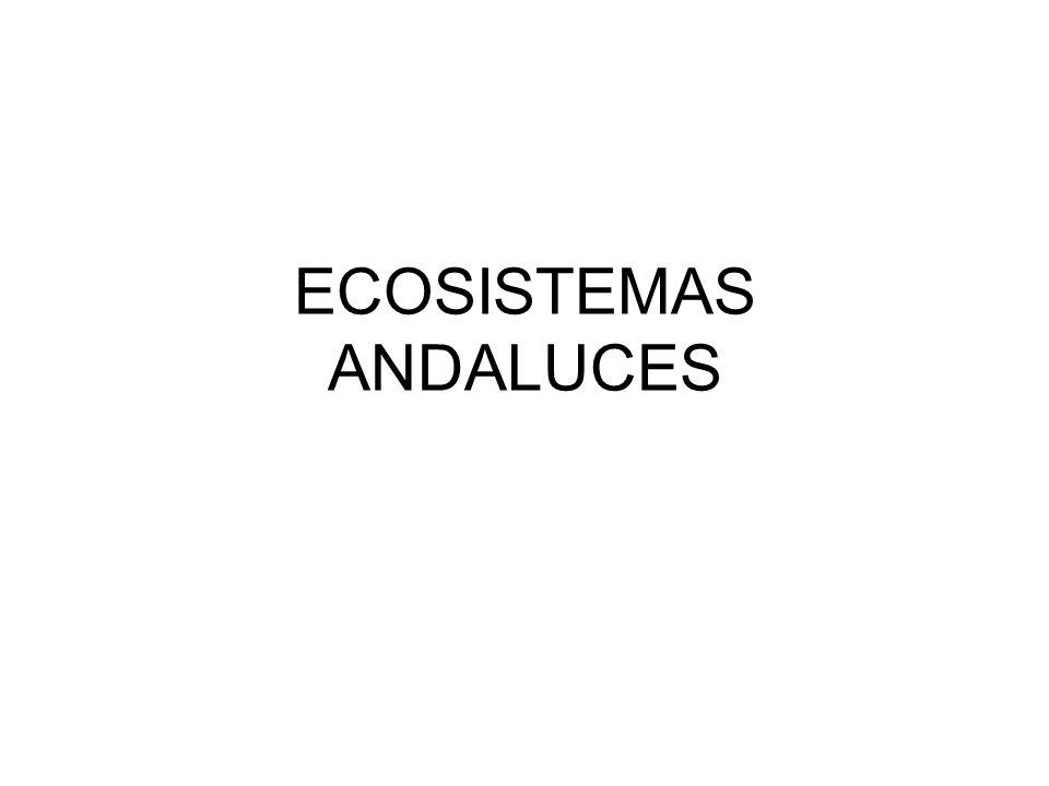 ECOSISTEMAS ANDALUCES