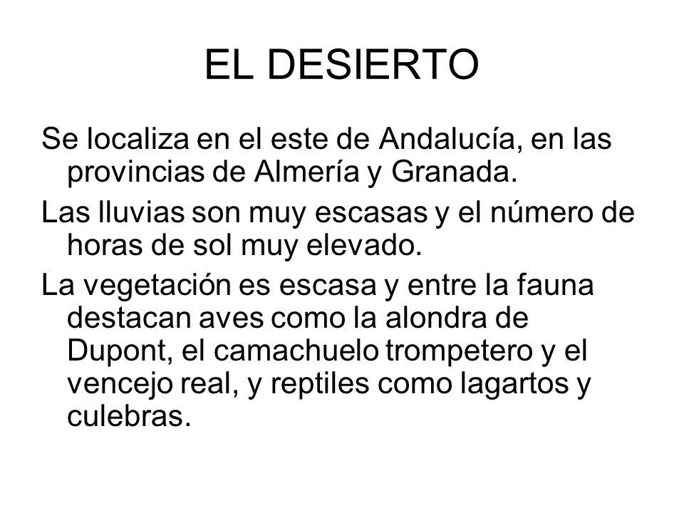 EL DESIERTO Se localiza en el este de Andalucía, en las provincias de Almería y Granada. Las lluvias son muy escasas y el número de horas de sol muy e