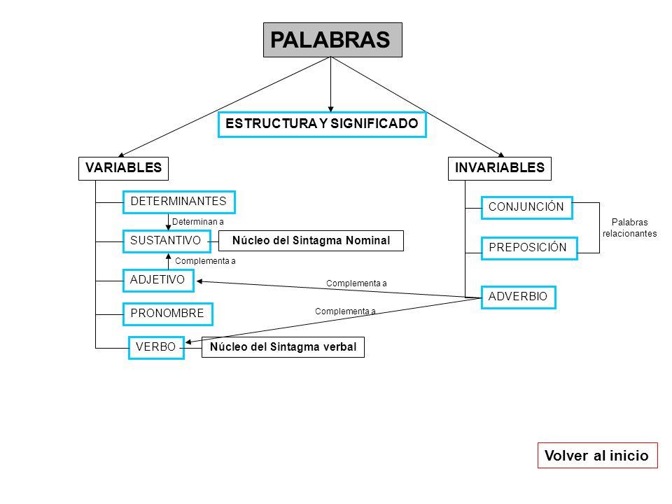 PALABRAS INVARIABLESVARIABLES DETERMINANTES SUSTANTIVO ADJETIVO VERBO PRONOMBRE CONJUNCIÓN ADVERBIO PREPOSICIÓN Núcleo del Sintagma Nominal Núcleo del