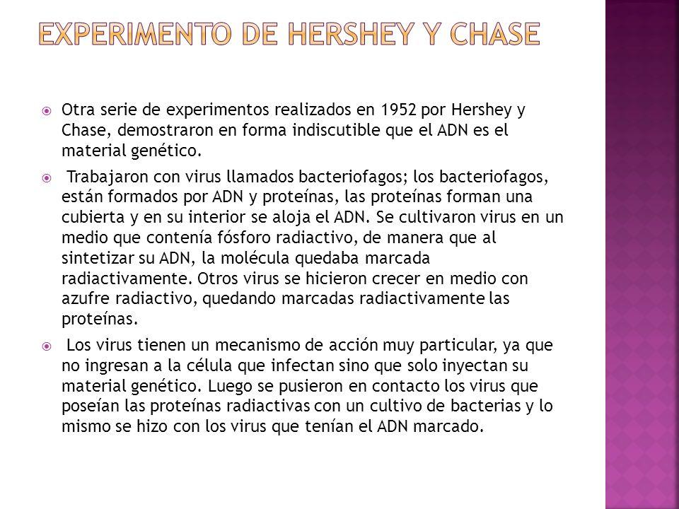 Otra serie de experimentos realizados en 1952 por Hershey y Chase, demostraron en forma indiscutible que el ADN es el material genético. Trabajaron co