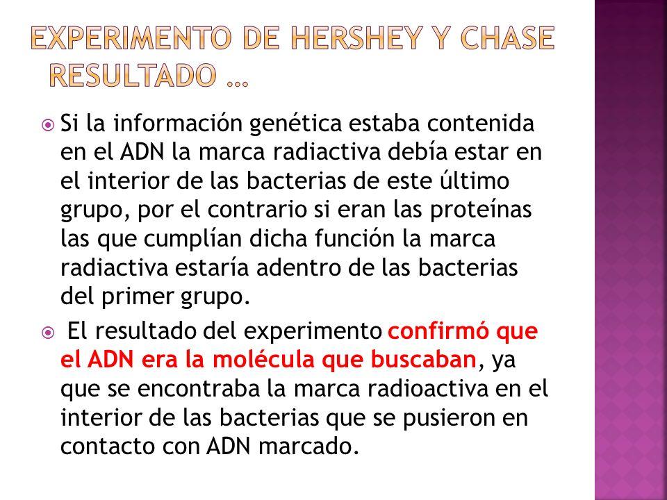 Si la información genética estaba contenida en el ADN la marca radiactiva debía estar en el interior de las bacterias de este último grupo, por el con