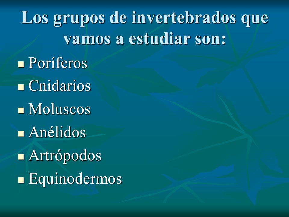Los grupos de invertebrados que vamos a estudiar son: Poríferos Poríferos Cnidarios Cnidarios Moluscos Moluscos Anélidos Anélidos Artrópodos Artrópodo
