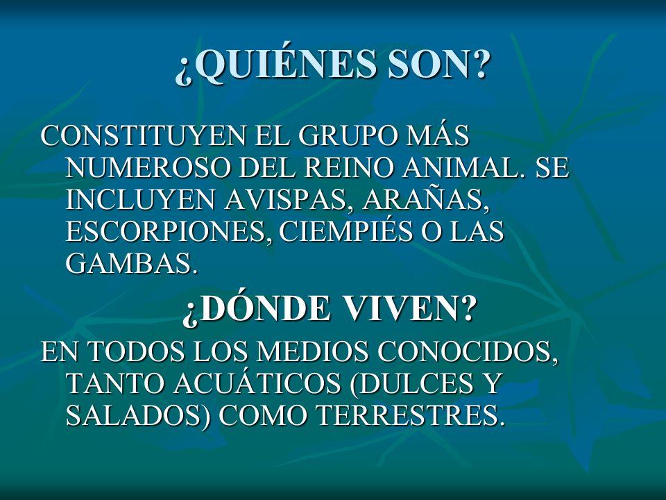 ¿QUIÉNES SON? CONSTITUYEN EL GRUPO MÁS NUMEROSO DEL REINO ANIMAL. SE INCLUYEN AVISPAS, ARAÑAS, ESCORPIONES, CIEMPIÉS O LAS GAMBAS. ¿DÓNDE VIVEN? ¿DÓND