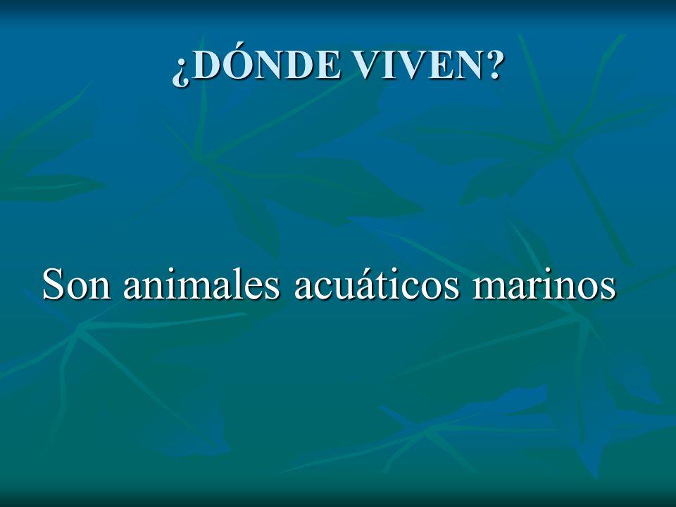 ¿DÓNDE VIVEN? Son animales acuáticos marinos