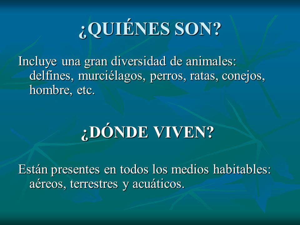 ¿QUIÉNES SON? Incluye una gran diversidad de animales: delfines, murciélagos, perros, ratas, conejos, hombre, etc. ¿DÓNDE VIVEN? ¿DÓNDE VIVEN? Están p