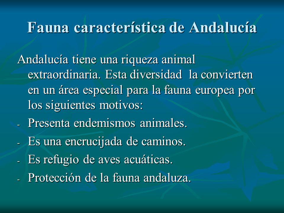 Fauna característica de Andalucía Andalucía tiene una riqueza animal extraordinaria. Esta diversidad la convierten en un área especial para la fauna e