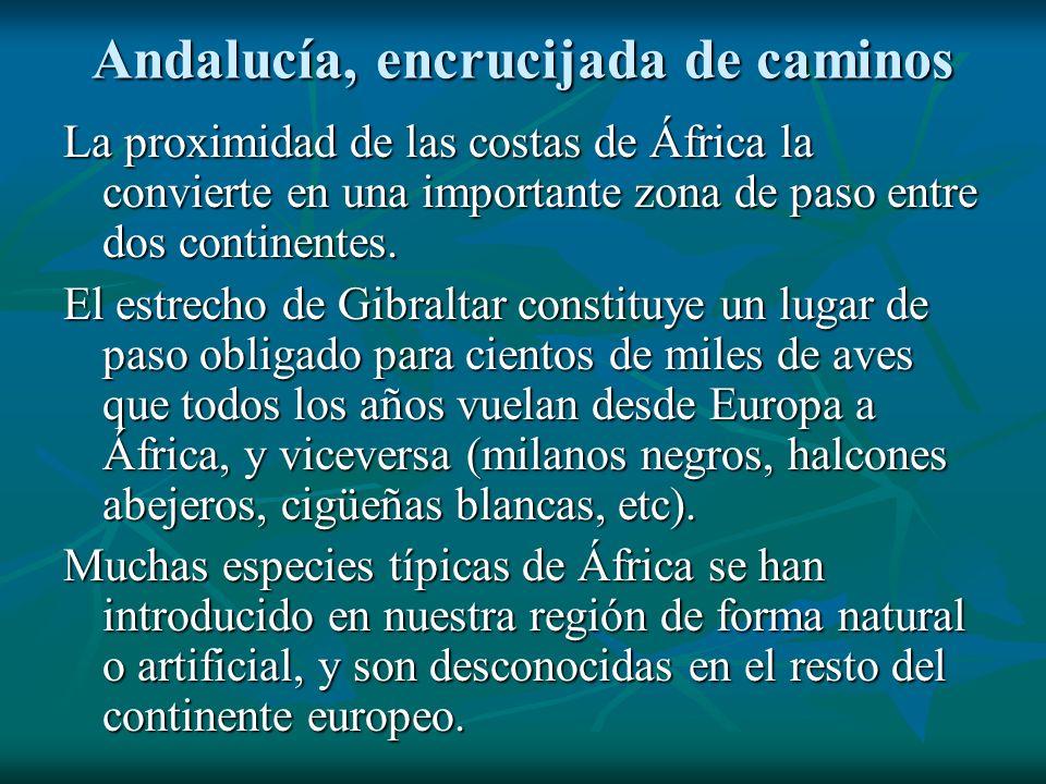 Andalucía, encrucijada de caminos La proximidad de las costas de África la convierte en una importante zona de paso entre dos continentes. El estrecho