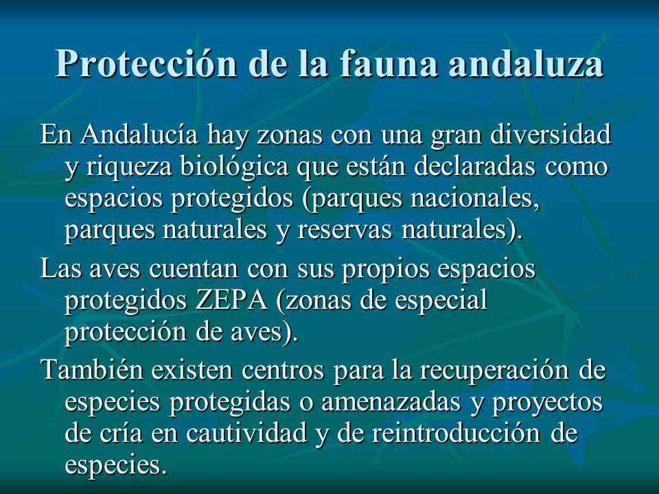 Protección de la fauna andaluza En Andalucía hay zonas con una gran diversidad y riqueza biológica que están declaradas como espacios protegidos (parq