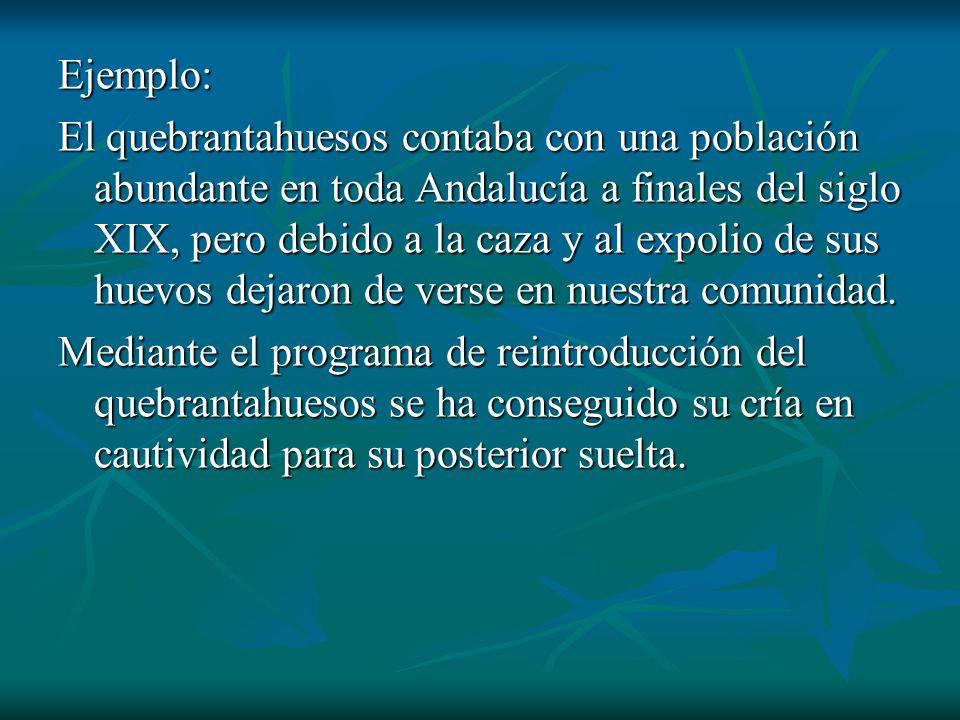 Ejemplo: El quebrantahuesos contaba con una población abundante en toda Andalucía a finales del siglo XIX, pero debido a la caza y al expolio de sus h