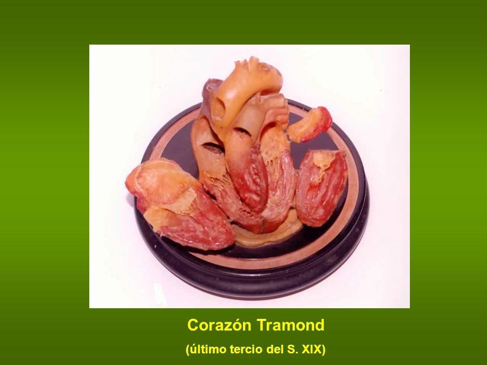 Corazón Tramond (último tercio del S. XIX)