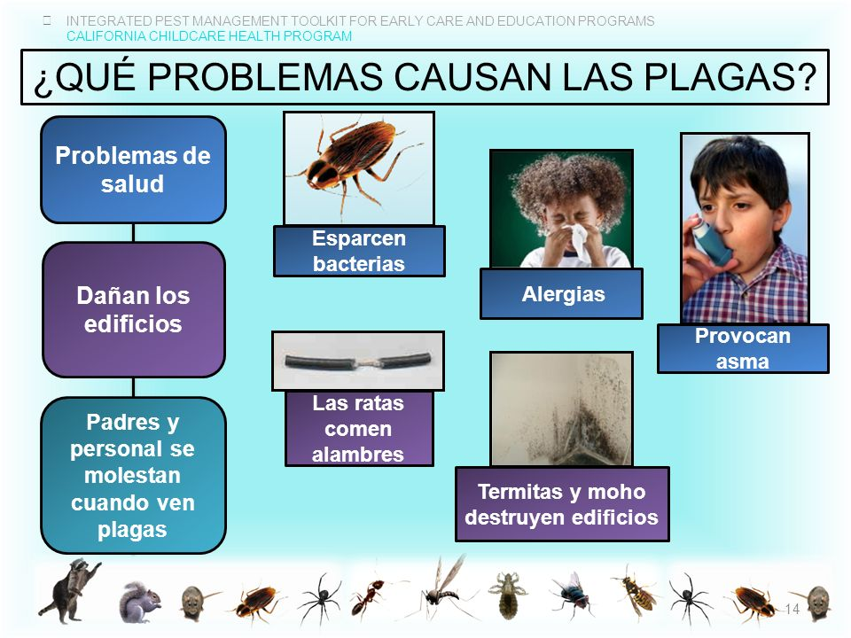 INTEGRATED PEST MANAGEMENT TOOLKIT FOR EARLY CARE AND EDUCATION PROGRAMS CALIFORNIA CHILDCARE HEALTH PROGRAM ¿QUÉ PROBLEMAS CAUSAN LAS PLAGAS? Dañan l