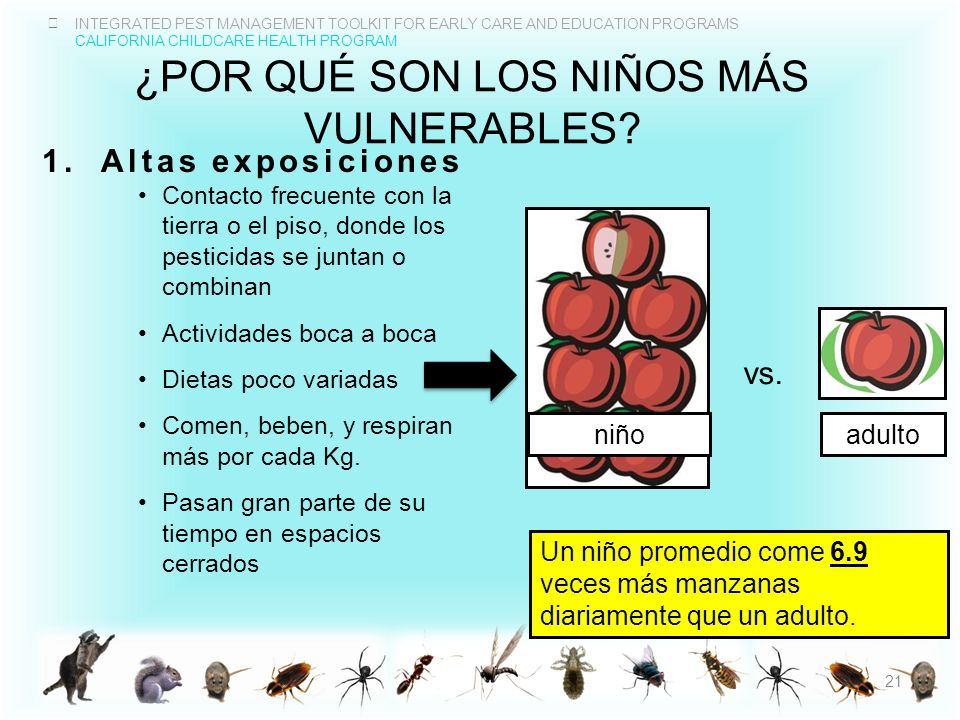 INTEGRATED PEST MANAGEMENT TOOLKIT FOR EARLY CARE AND EDUCATION PROGRAMS CALIFORNIA CHILDCARE HEALTH PROGRAM ¿POR QUÉ SON LOS NIÑOS MÁS VULNERABLES? 1