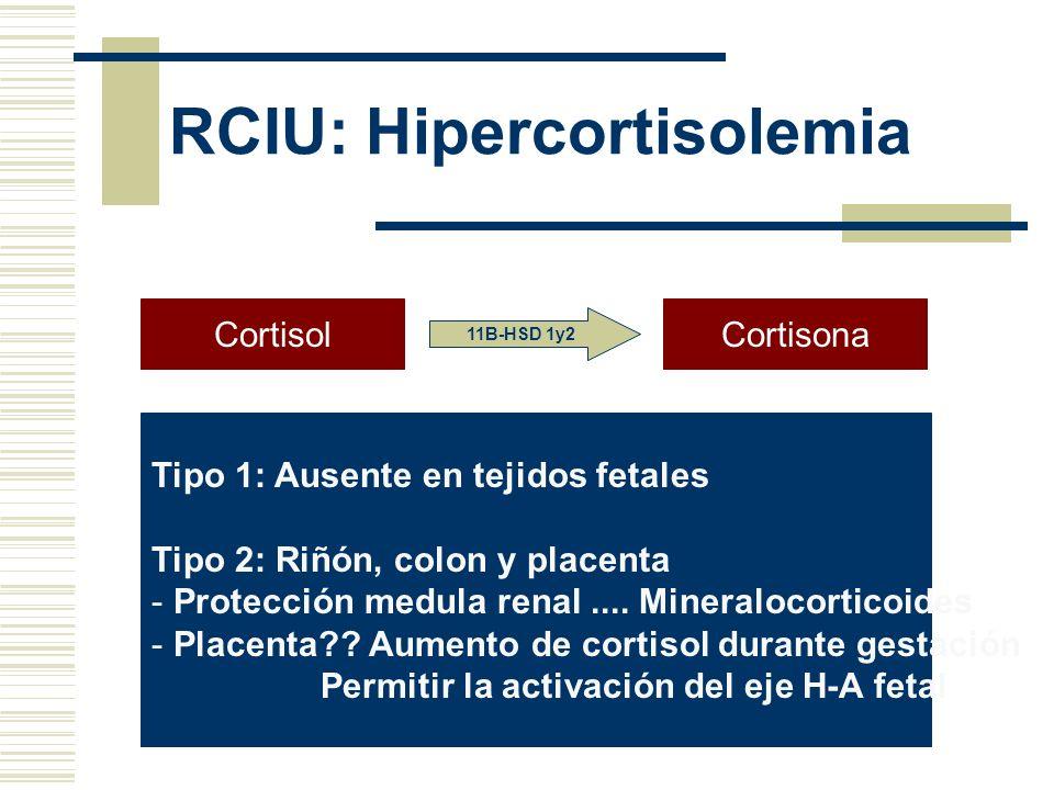RCIU: Hipercortisolemia CortisolCortisona 11B-HSD 1y2 Tipo 1: Ausente en tejidos fetales Tipo 2: Riñón, colon y placenta - Protección medula renal....