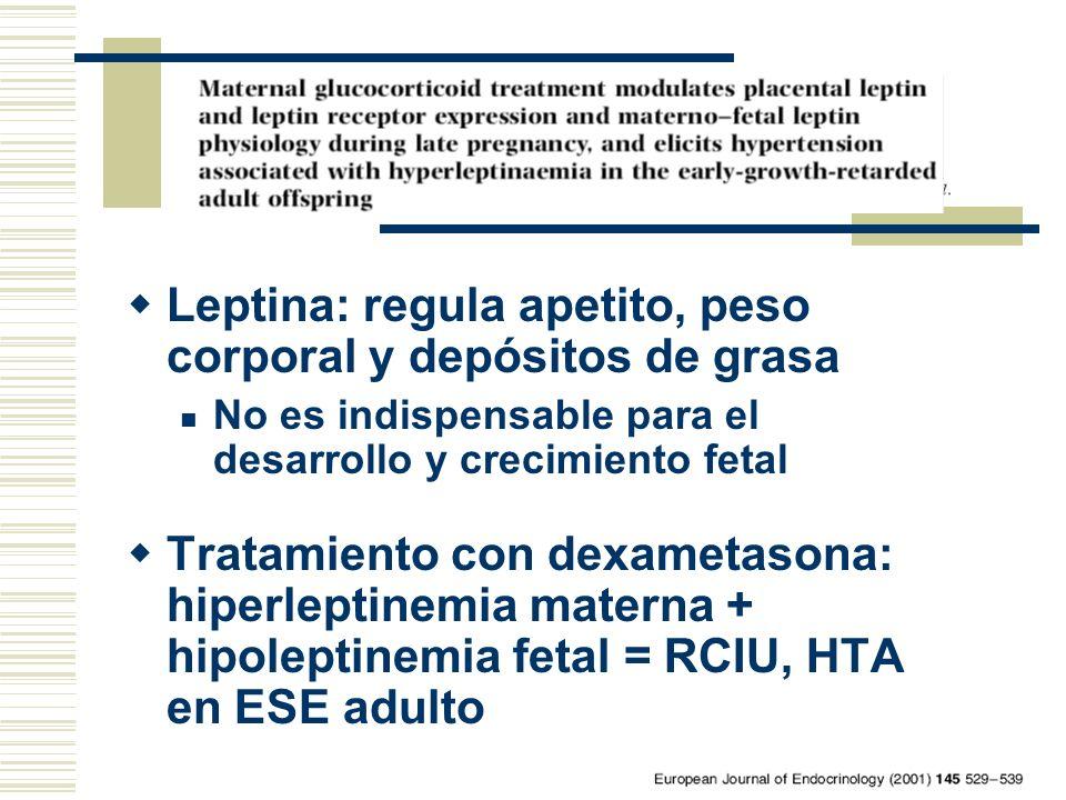 Leptina: regula apetito, peso corporal y depósitos de grasa No es indispensable para el desarrollo y crecimiento fetal Tratamiento con dexametasona: h