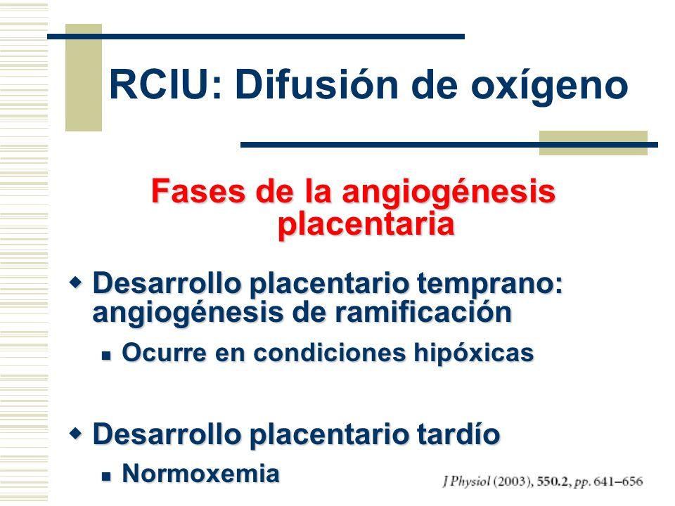 Fases de la angiogénesis placentaria Desarrollo placentario temprano: angiogénesis de ramificación Desarrollo placentario temprano: angiogénesis de ra