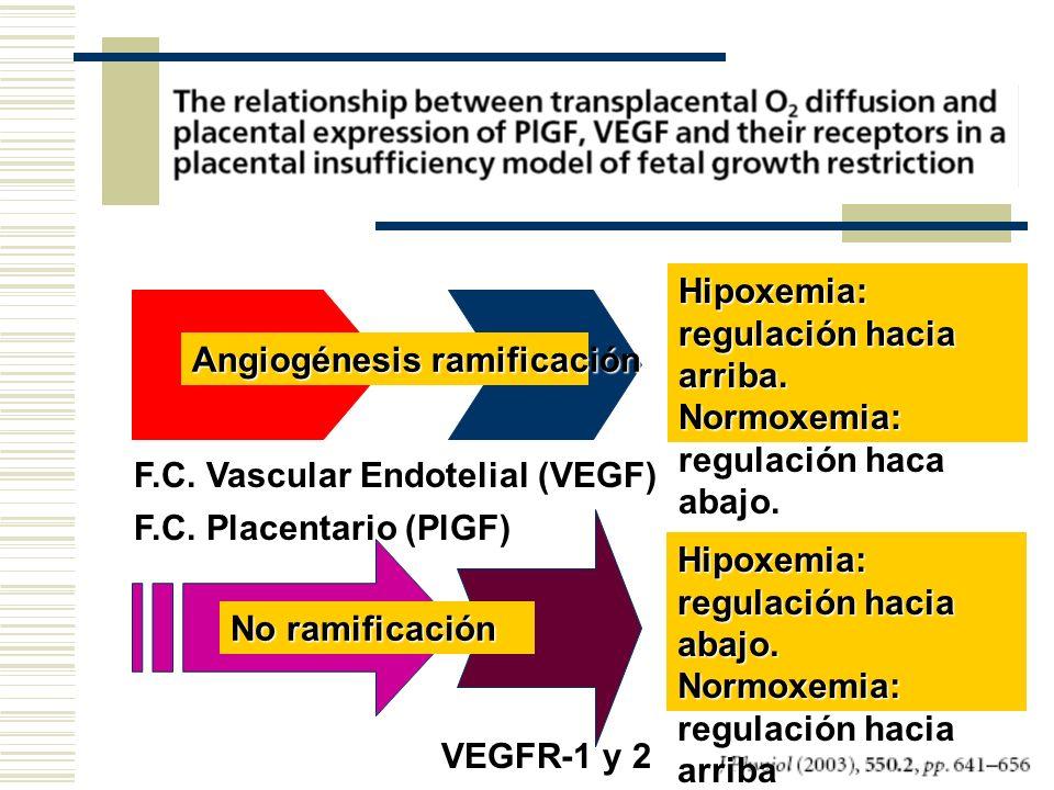 F.C. Placentario (PlGF) F.C. Vascular Endotelial (VEGF) VEGFR-1 y 2 Angiogénesis ramificación Hipoxemia: regulación hacia arriba. Normoxemia: regulaci